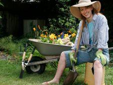 4 legume pe care le poti planta in octombrie