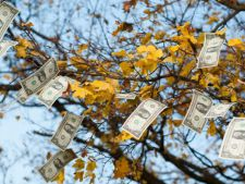 bani toamna