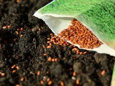 plantare rasaduri legume