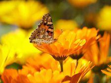 3 plante medicinale pe care trebuie sa le cresti in gradina