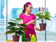 Lucruri carora trebuie sa le acorzi atentie atunci cand cumperi flori pentru gradina ta. Sunt foarte importante
