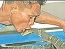 19 serpi veninosi