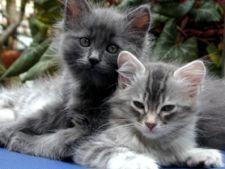Comportamentul pisicii