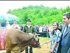 Vaca Miss