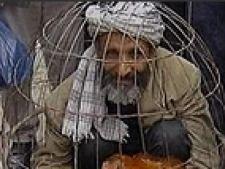 gripa aviara egipt