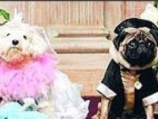 nunta canina
