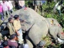 elefant mort