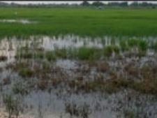 teren inundat camp