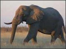 5 reguli de aur pentru o memorie de elefant