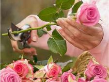 Specii de trandafiri