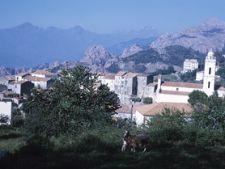 Corsica oras