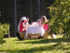 Reguli internationale pentru servirea mesei