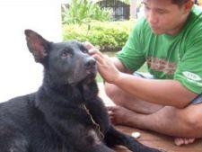 curata urechile cainelui