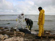 448189 0810 delfin marea neagra