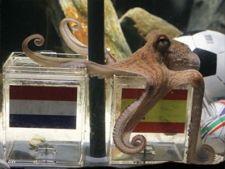 caracatita paul