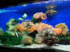 Cum sa cureti un acvariu cu pesti
