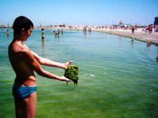 alge litoral