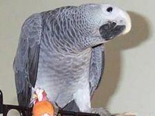 Invata-ti papagalul sa vorbeasca