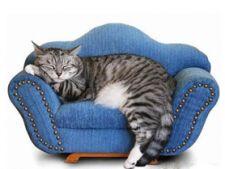 pisica ingrijita corespunzator