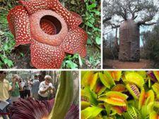 50 de lucruri inedite despre plante