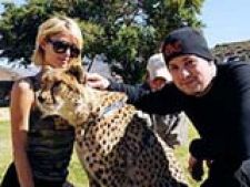 paris hilton safari