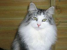 Bolile pisicii de la A la Z - Partea a III-a