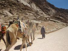 Vacanta in trei tari: atractii egiptene in Sinai (II)