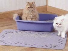 Tipuri de nisip pentru pisici