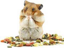 Ce mananca un hamster