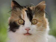 Bolile pisicii de la A la Z - Partea I