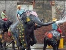 Songkran elefant
