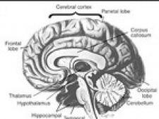 altruism creier