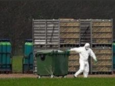 H5N1 aviara anglia
