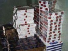 440513 0810 contrabanda tigari