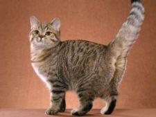 Cum sa cureti urina de pisica de pe covor