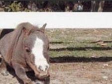 cel mai mic cal