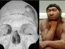 craniu neanderthal