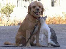 Cainele si pisica pot fi prieteni