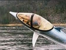 delfin barca