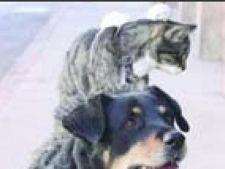 caine, pisica, soareci