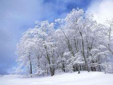 568116 0812 iarna