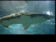 434516 0810 rechin