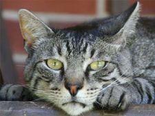 protejeaza pisica de pericolele din casa