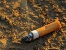 521459 0812 muc de tigara