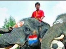 Elefant fotbalist