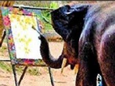 Elefant Pictor