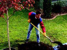 Ghid de plantare a pomilor fructiferi de la Acasa.ro si Bricostore