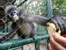 maimuta zoo