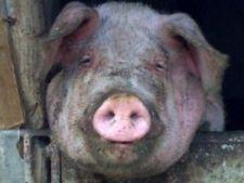 518959 0812 porc