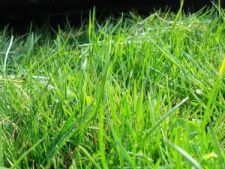 Semanatul  gazonului in perioada martie - octombrie